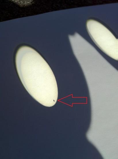 Venus through Leupold Binoculars