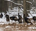 02-03-2014-turkey-hunting