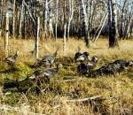02-10-2014-turkey-hunting-pt-2