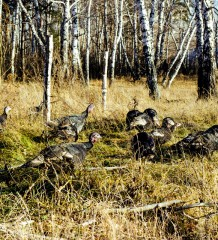02-10-2014-turkey-hunting-pt-2