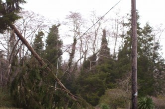 winter-storm-2007-tree-falling-on-power-line-bay-center-road