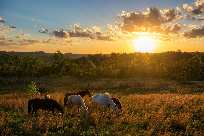 Kentucky Wild Horses