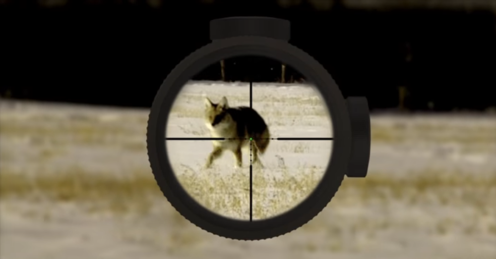shooting a moving target